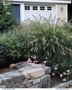 Fountain grass ( Pennisetum alopecuroides , Zones 6–9)