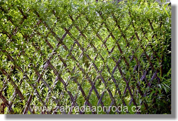 pletený živý plot
