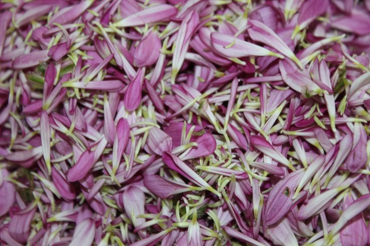 Cama de flores para la celebración del aniversario de nuestra abuela temazcal Metztli