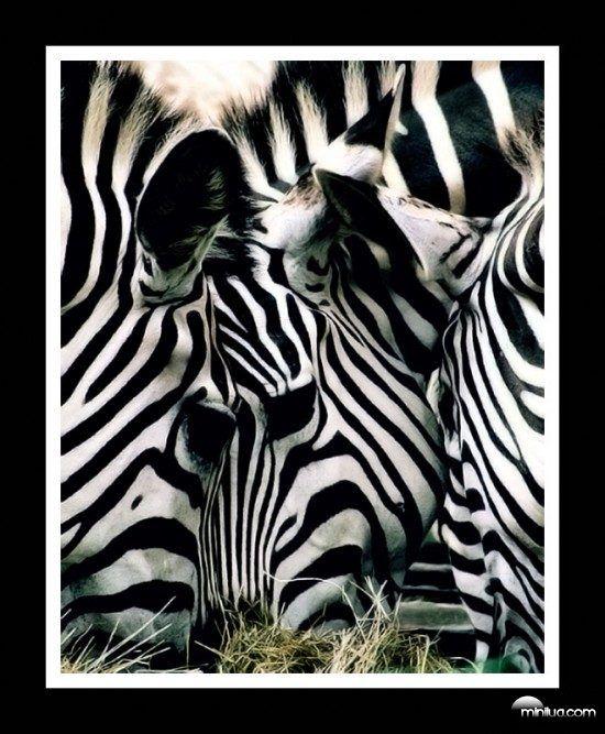 Uma ilusão de ótica é caracterizada por imagens visualmente percebidas que…
