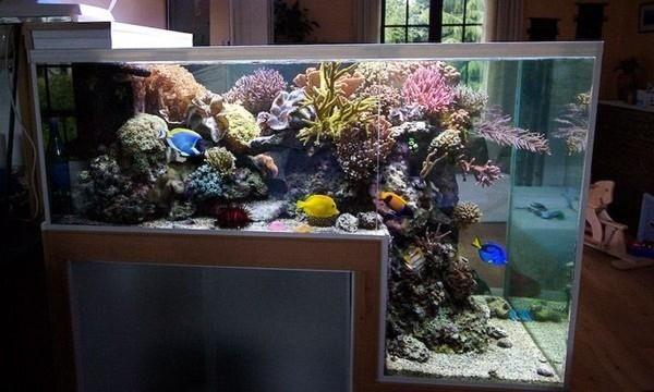 50 New Style Aquarium Design Ideas For Your Home Coolupon Aquarium Design Marine Aquarium Fish Tank