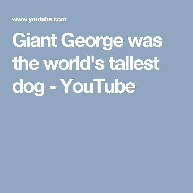Giant George was the world's tallest dog - YouTube