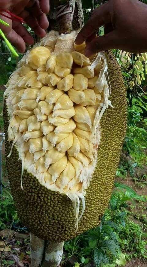 Fruta Jaca....