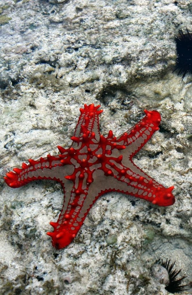 This Starfish will become a watercolor and hung on my wall. Spectacular!