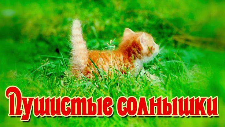 Рыжие котята для хорошего настроения