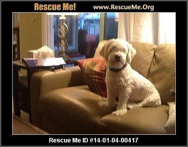 ― California Cockapoo Rescue ― ADOPTIONS ―RescueMe.Org