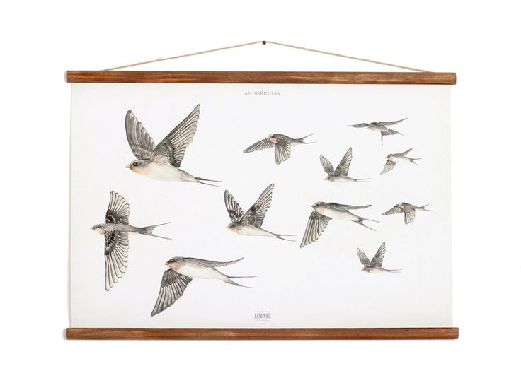 This birds, the swallows, are a national icon in Portugal - as Andorinhas - people use a clay bird to decor their houses and to invite this beautiful creatures to nest in their roofs, they are a symbol of spring and prosperity. #arminho #andorinhas #swallows