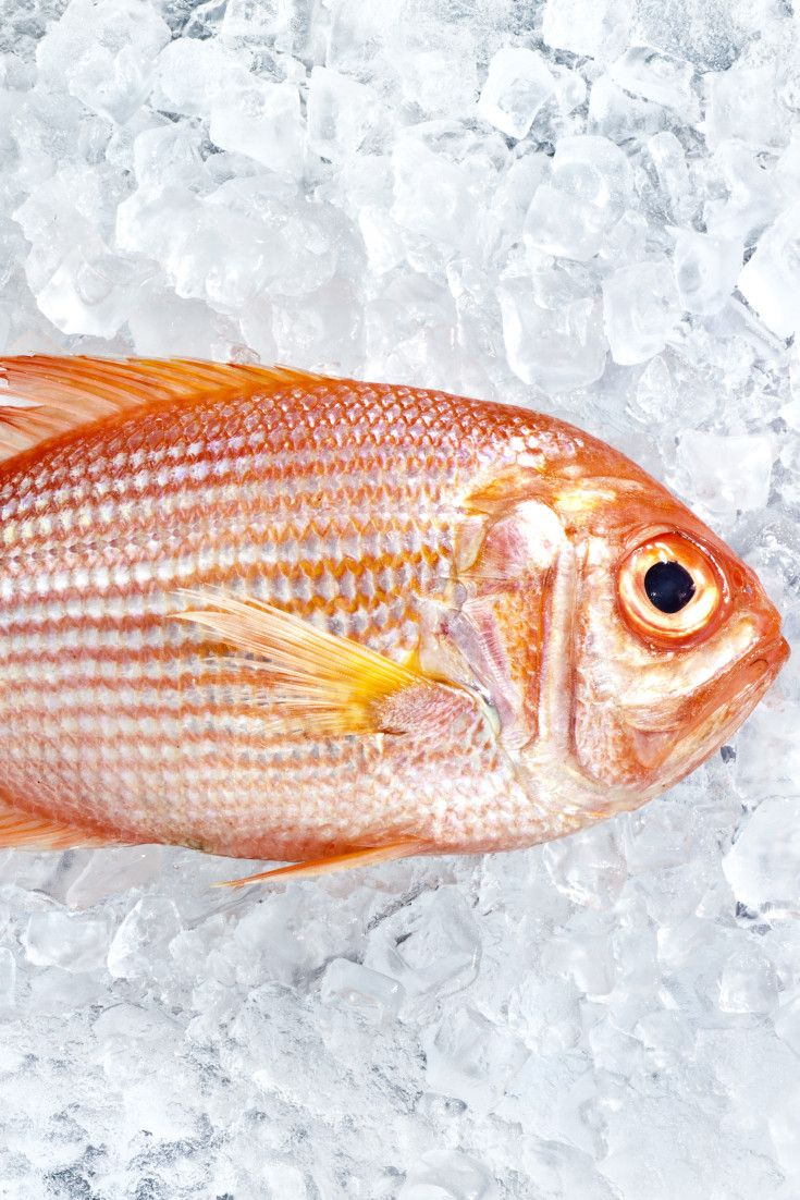 17 best images about healthy food and lifestyle on for How long do fish stay pregnant