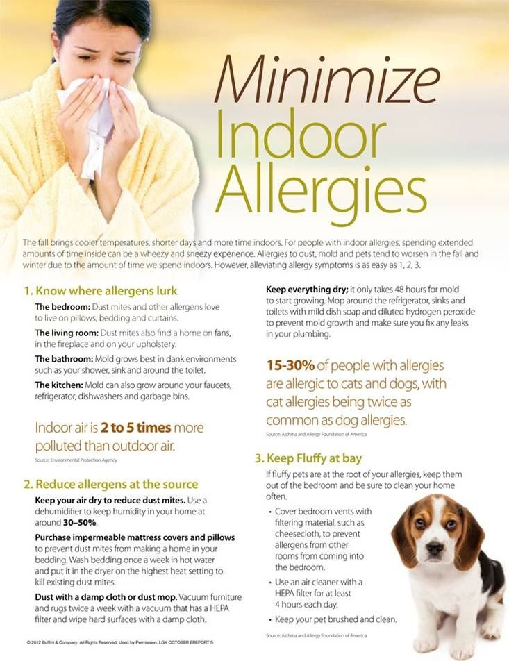 Minimize Indoor Allergies Allergies Pet Dander Dog Daycare Near Me