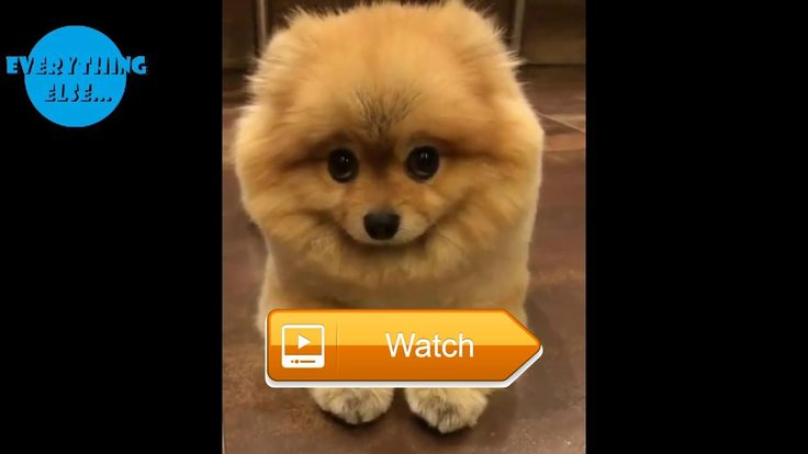 Cutest Cats and Dogs Videos Compilation Most Beautiful Animals In The World  This is a Video Compilation Of The Most Cute Cats and Dogs Doing Cute and Funny Things Watch it till the end This is most Funny Video Share And Like Our  on Pet Lovers