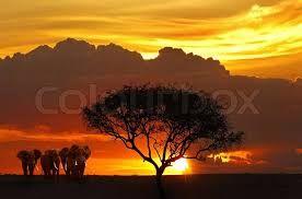 Image result for summer sunrise on savanna plains