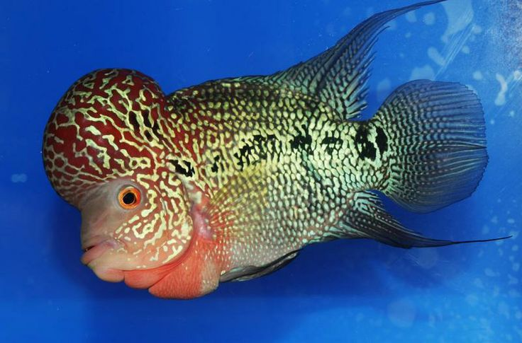 tropical fish and freshwater fish for sale in baton rouge