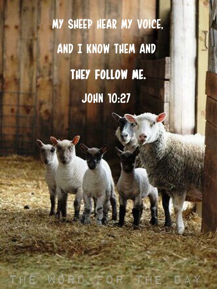 """""""...and I give them eternal life, and they shall never perish."""""""