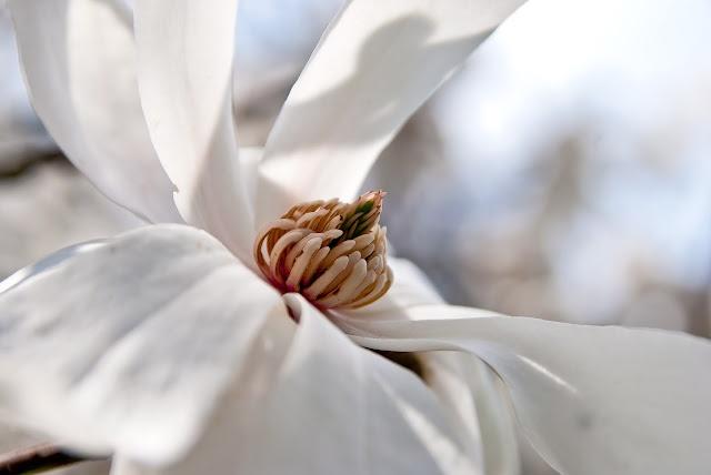 silk flowers near me