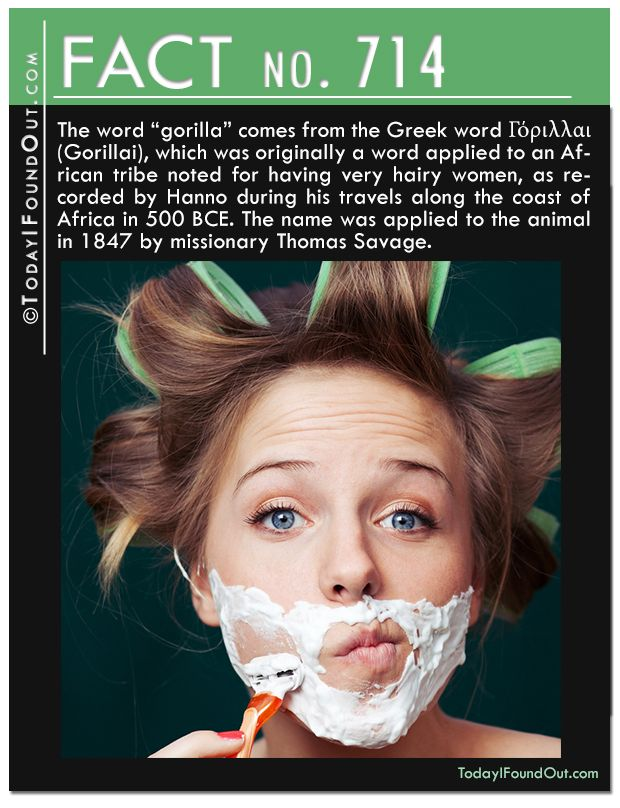 """The word """"gorilla"""" comes from the Greek word Γόριλλαι (Gorillai), which was originally a word applied to an African tribe noted for having very hairy women, as recorded by Hanno during his travels along the coast of Africa in 500 BCE. The name was applied to the animal in 1847 by missionary Thomas Savage."""