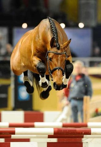 Salento jumping - Horses look so funny and cute when they have their feet tucked under them like this.