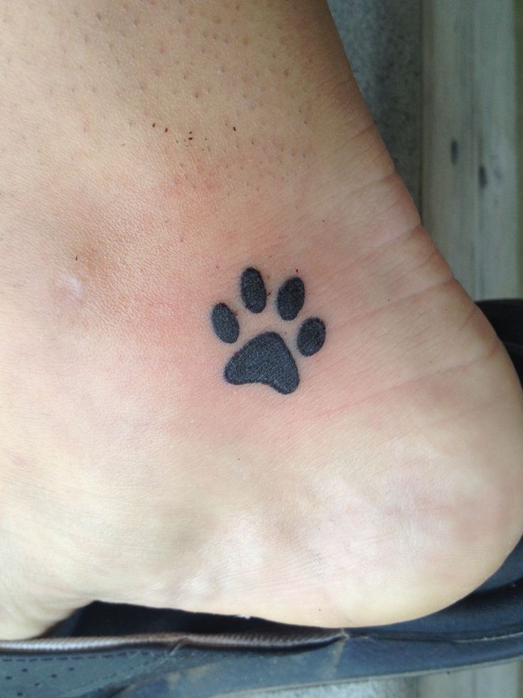 My paw print tattoo in memory of my sweet Charlie cat. I miss him so much