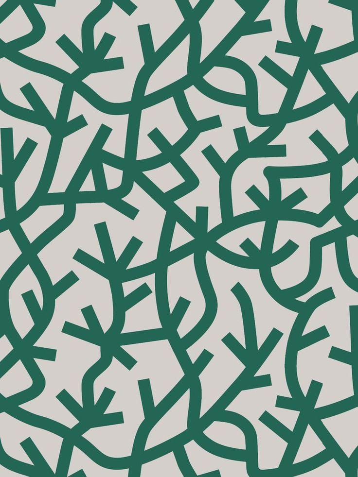 Image of A Forest - Douglas Fir