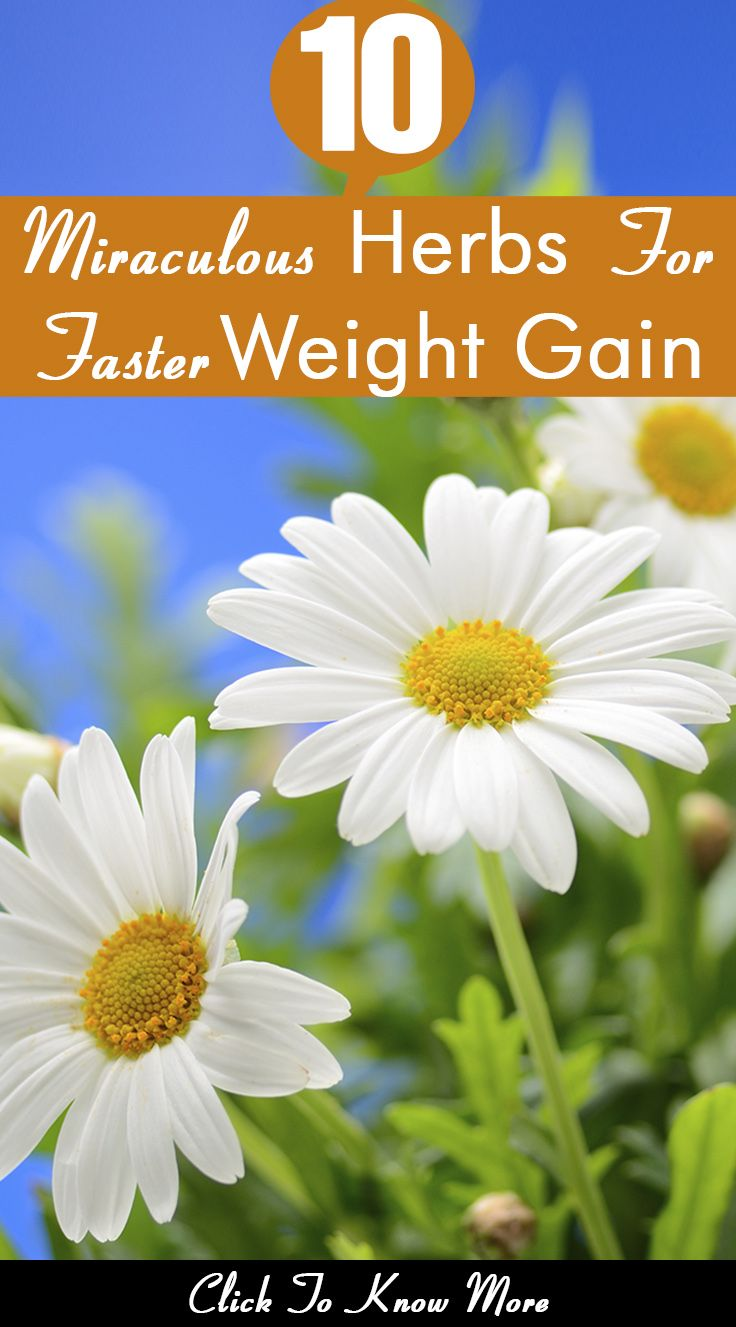 Herbs for weight loss 10 Miraculous Herbs For Faster Weight Gain