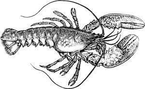 PublicDomainVectors.org-Lobster clip art image in 2020