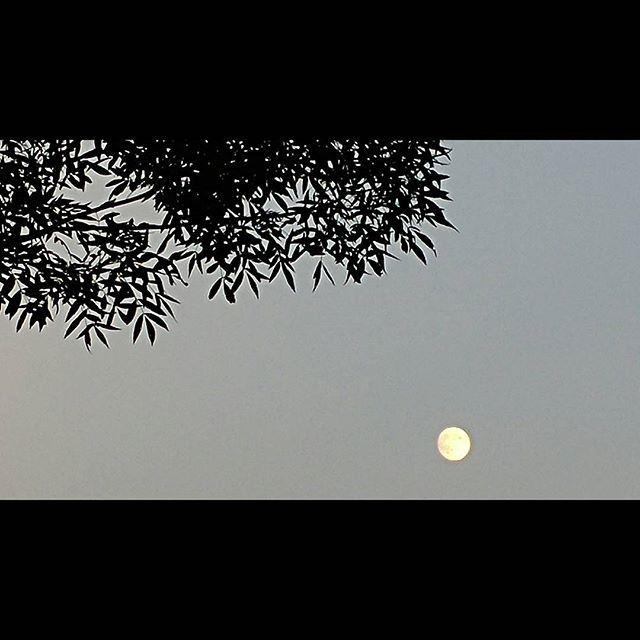 Evening #moon #august #balaton #lake #ig_magyarorszag #ig_balaton #gergelybarki #ilovehungary #ilovebalaton #evening #ig_artistry #ig_hungary #leaves #sky #instaphoto #photogram #mood
