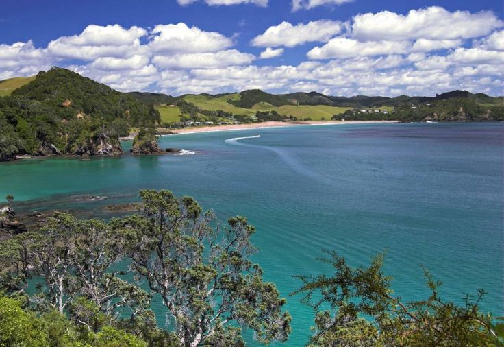British diver 'sliced to death' by boat engine blades in New Zealand