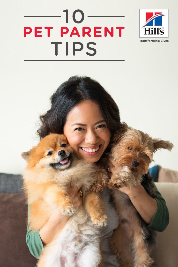 10 Everyday Helpful Pet Care Tips Pet Care Pet Care Dogs Sick Pets