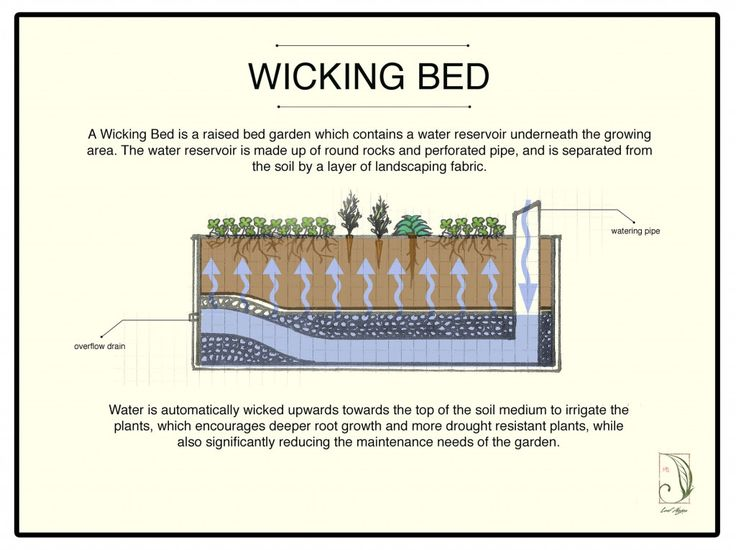 wicking bed 1