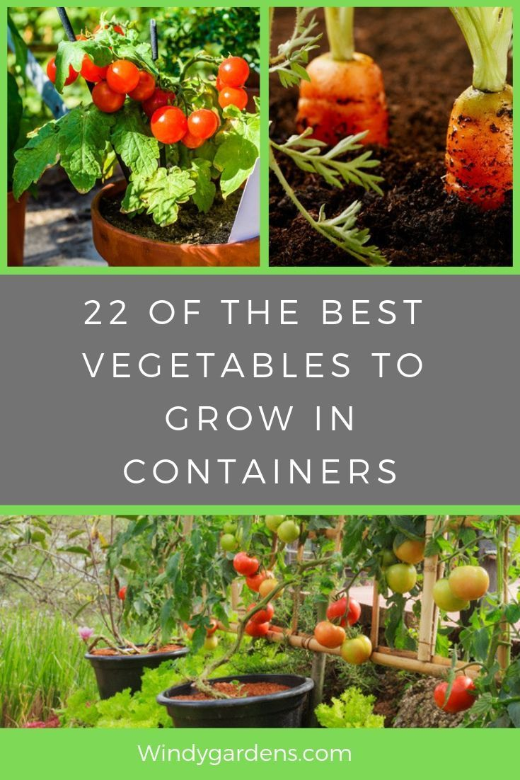 The Best Vegetables To Grow In Containers Are Listed Here Most Vegetables Can Be Grow Growing Vegetables Container Gardening Vegetables Organic Gardening Tips Backyard garden what to grow