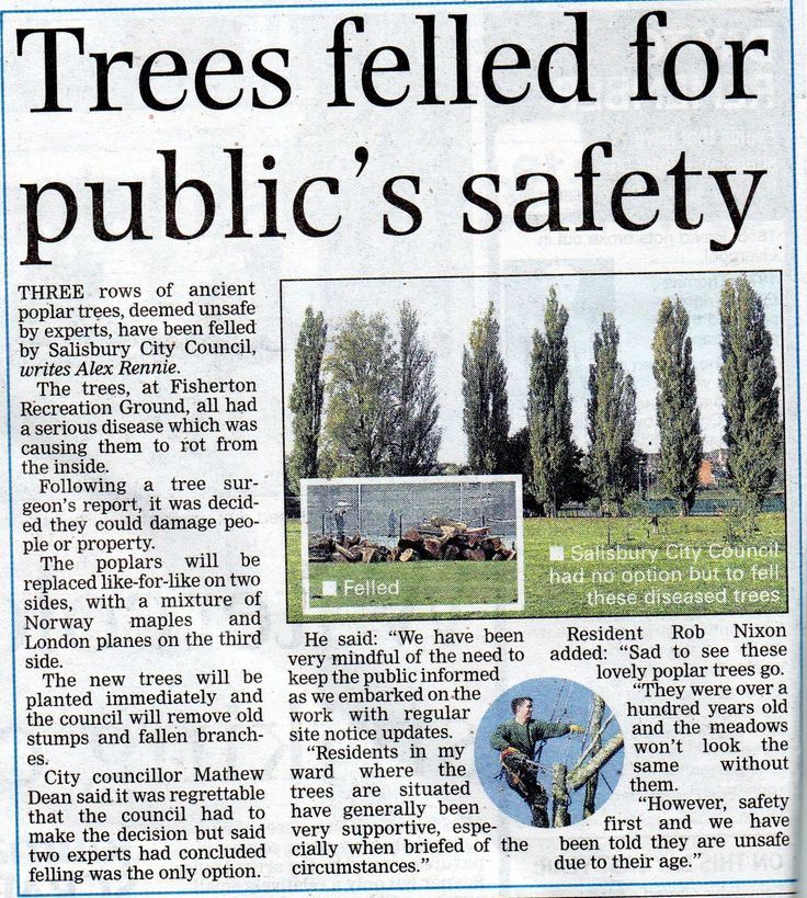 Felling of ancient poplar trees at Fisherton Recreation Ground. (Salisbury Journal, 19/02/2015)