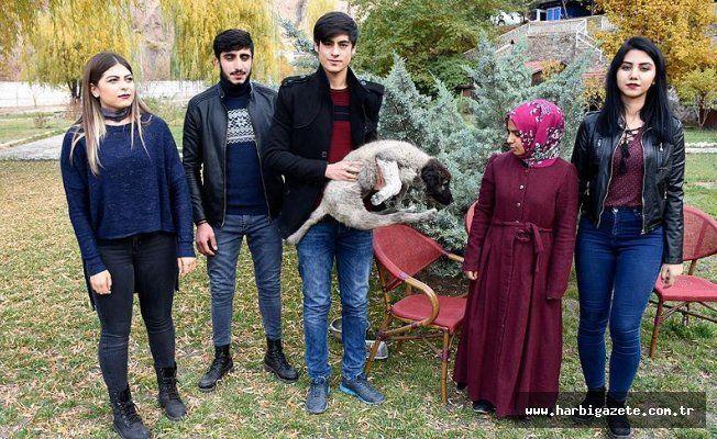 Felçli köpeğe üniversite öğrencileri sahip çıktı Gümüşhane'de üniversite öğrencileri, çöp depolama alanında buldukları arka ayakları felçli köpeği tedavi için İstanbul'a gönderecek.