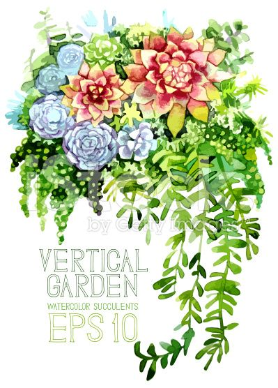 Watercolor succulents royalty-free stock vector art
