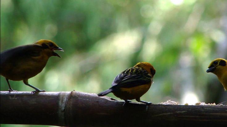 Cali la ciudad de las aves