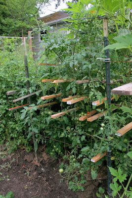 I was just reading Pioneer Woman's blog and she posted about her favorite tomato cages .  I took a look at those tomato cages and knew that ...