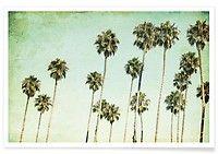 Palm Trees - Mareike Böhmer - Premium Poster