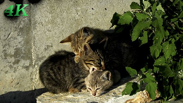 Kittens Are Playing On The Rocks 3
