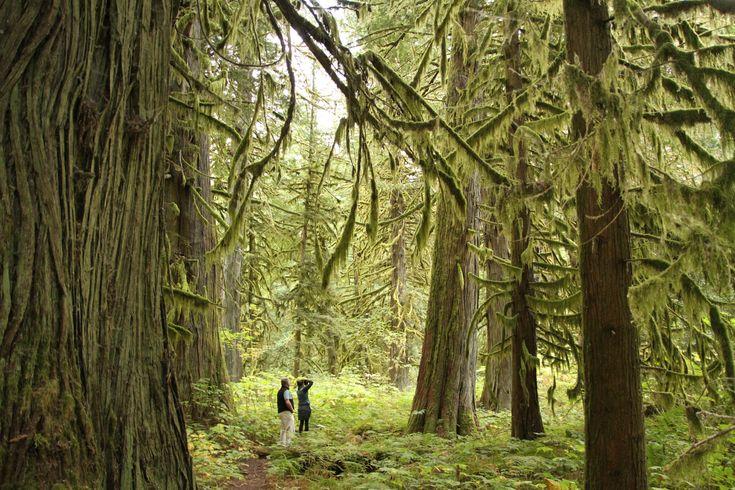 Big Cedars Trail, Bella Coola. Photo: Robyn Hanson