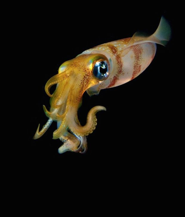 Beautiful Glowing Ocean Creatures from the Deep