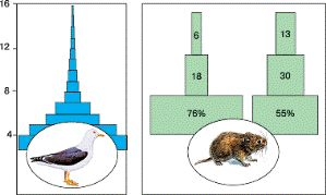 Биология в лицее: Демографическая структура популяций