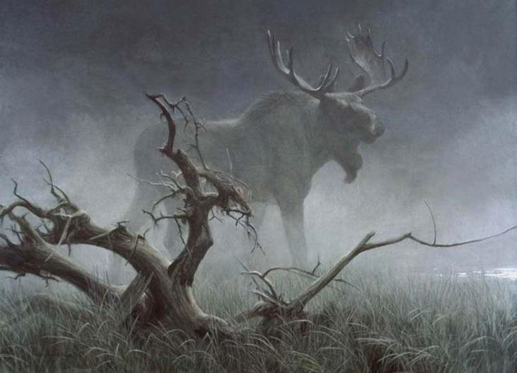 mooseA Moose, Misty Moose, Moosen Flock, Moose Animal, Mistic Moose, Photography Art, Beautiful Creatures, Deer, Animal Animal