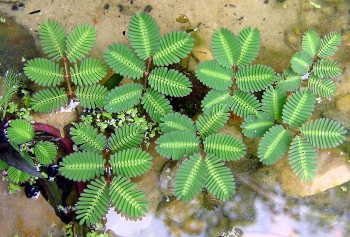 how to get rid of algae in your fish pond
