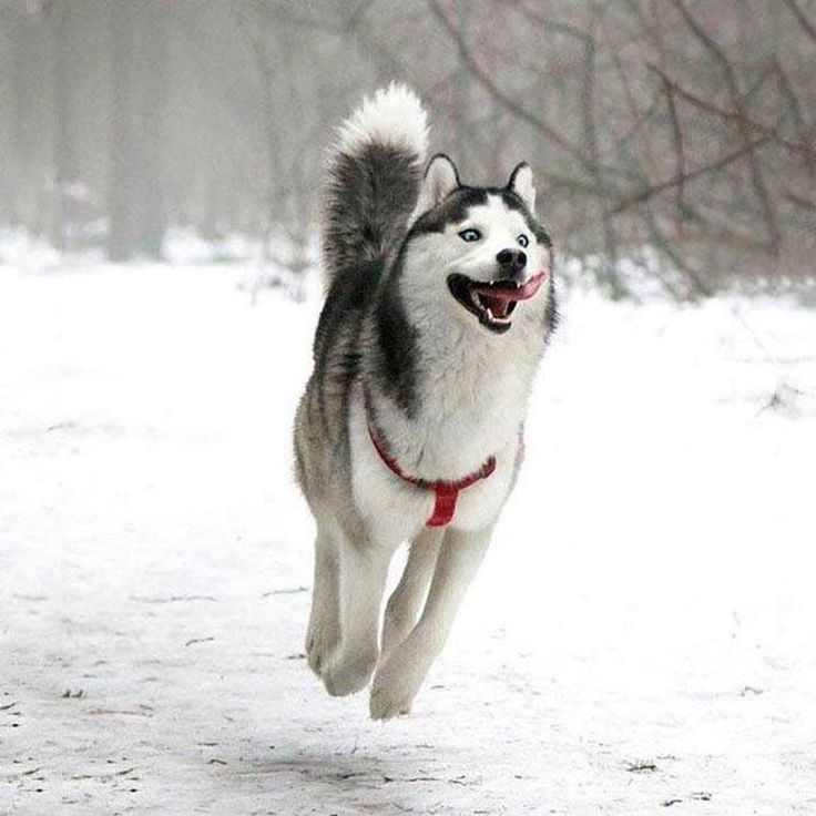 Some of us are more excited about snow then others.