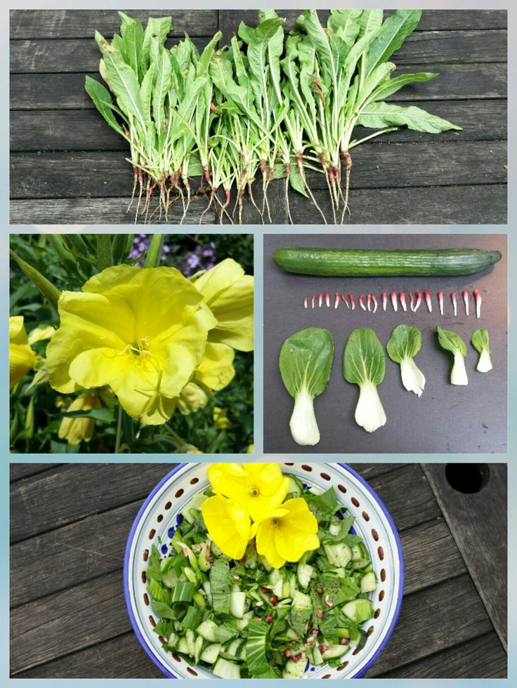 ☆ TEUNISBLOEMSALADE Ingrediënten: - jonge paksoi - komkommer - worteltjes en bloemen van de teunisbloem - olie en azijn - peper en zout.