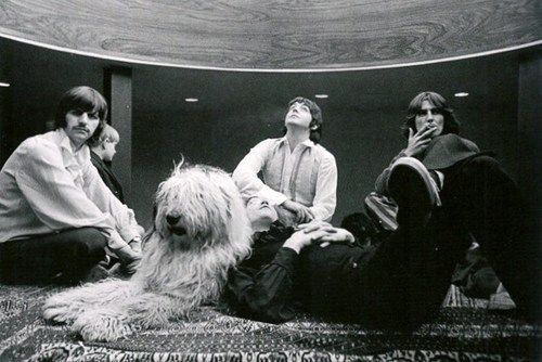 Beatles fact: the old english sheep dog in this picture belonged to Paul, her name is Martha, and the song Martha My Dear was written about her.
