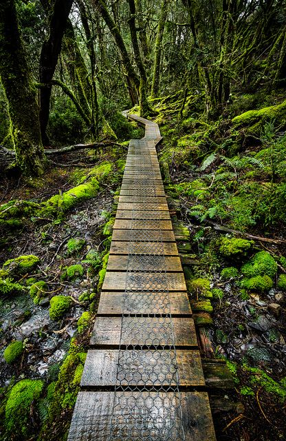 Forest path ~ Tasmania