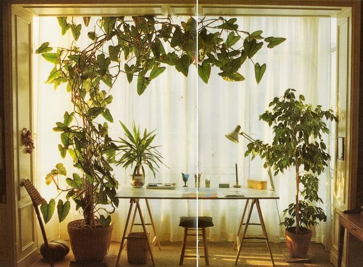 All Images from Terence Conran's Decorating with Plants Susan Conder © 1986 All images are from the 1986 edition of ...
