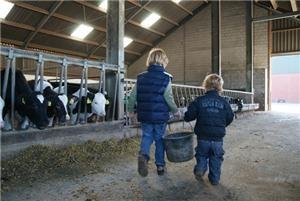 Koeien kijken bij #TussenKoeenKroonluchter #Diessen