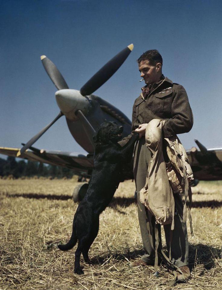 Il pilota da caccia britannico James «Johnnie» Johnson, comandante di stormo, con il suo cane labrador Sally e il suo aereo da combattimento Spitfire, in Normandia nel luglio del 1944. Nelle sue settecento missioni di guerra Johnson abbatté 34 aerei nemici. Gli furono accreditati altri sette abbattimenti condivisi, più tre condivisi probabili e un velivolo nemico distrutto al suolo. Un autentico asso della Royal Air Force.