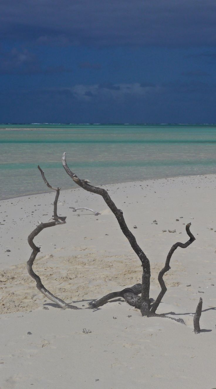 Day Trip to Tetiaroa Atoll 23 best