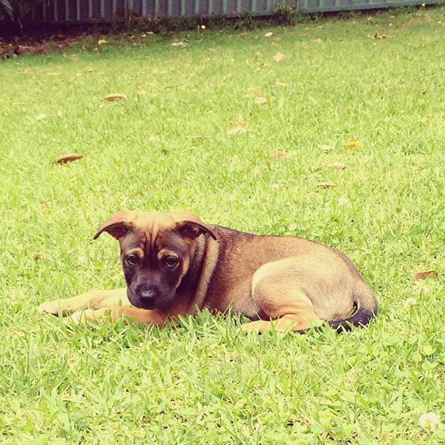 POND! #love #puppy #puppiesofinstagram #grass